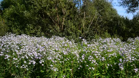 ot : Blue flowers at the edge of forest