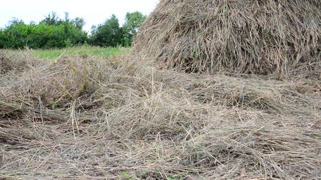 árpa : dry hay and haystack outdoors