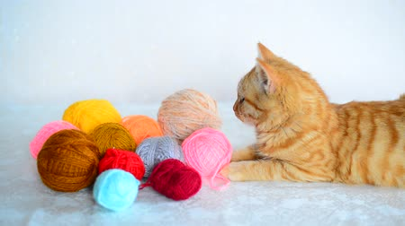 もつれた : Red kitten lies near colored yarn for knitting. 動画素材