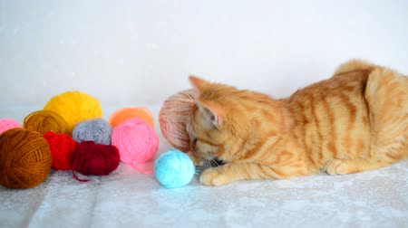 změť : Red kitten lies near colored yarn for knitting. Dostupné videozáznamy