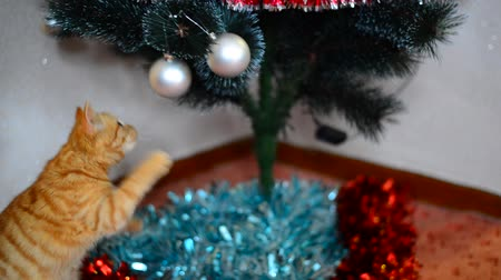 spiky : Kitten plays with toys on Christmas tree