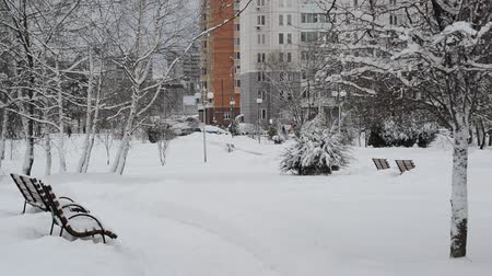 lucfenyő : snowfall in the city park in Moscow, Russia