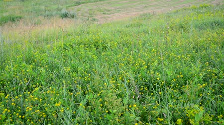 опылять : wild meadow with sloping and growing grass