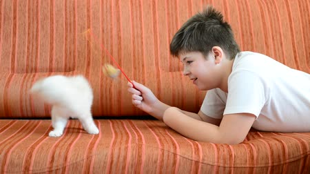 折り畳む : boy is playing with a kitten lying on red couch