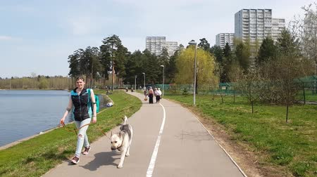 breeder : Moscow, Russia - May 02. 2018. People walk along the lake in Zelenograd Stock Footage