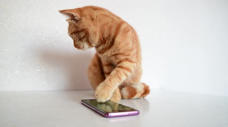 vöröses : Cat plays on smartphone with computer game mouse