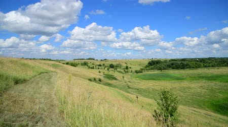 cardo : rural landscape in summer in July in Russia