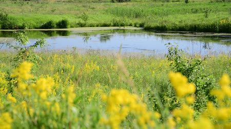 grassplot : small plain lake In central part of Russia Stock Footage