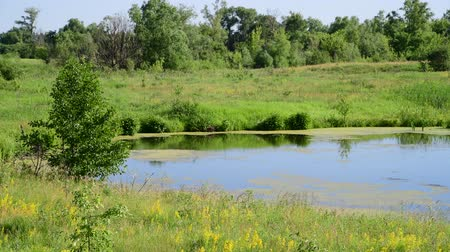 juni : small plain lake In central part of Russia Stockvideo