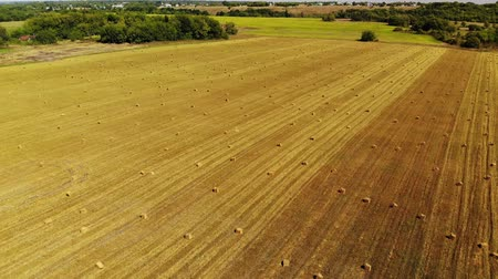dry stalks : Flight over field with bales of straw Stock Footage