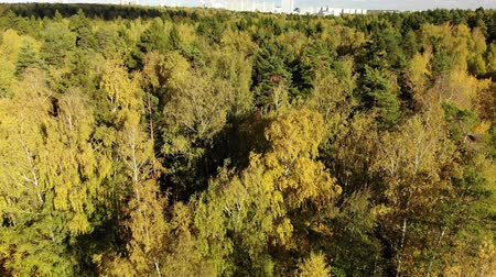 high rises : Autumn forest on outskirts of Moscow in Russia