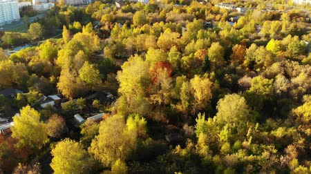 külvárosok : Flight over Autumn forest on outskirts of Moscow in Russia