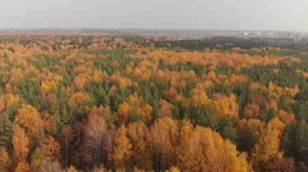 ecologically : top view of beautiful autumn forest with deciduous and coniferous trees