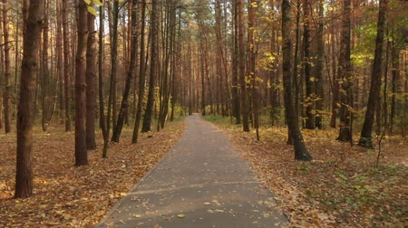ecologically : Asphalt path in the autumn deciduous forest