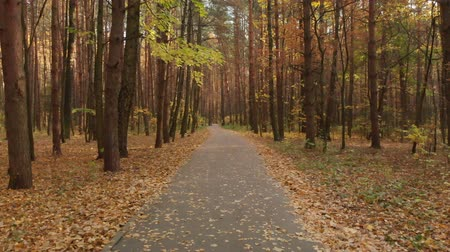 wooden path : Asphalt path in the autumn deciduous forest