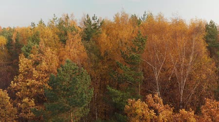 ecologically : climb up over beautiful autumn forest