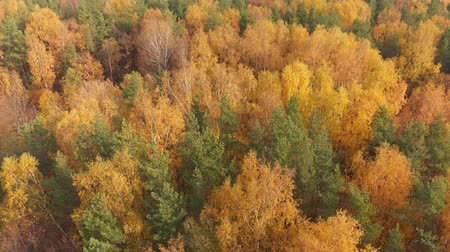 ecologisch : movement over beautiful autumn forest
