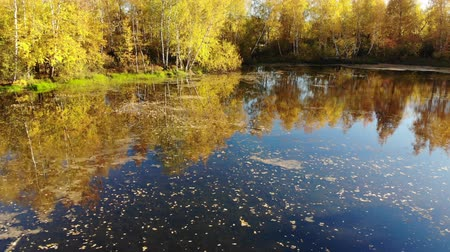 zarostlý : Russian autumn landscape with birches, pond and reflection