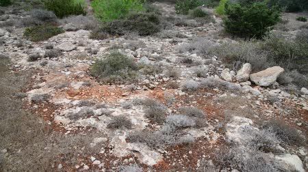 lifeless : grass on stony ground on the island of Cyprus Stock Footage