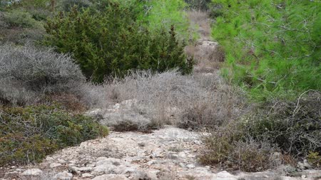 kypr : The nature of island of Cyprus - pine and stone land