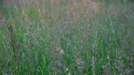 zab : Beautiful wild grass in the meadow, fragment