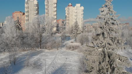 snow covered spruce : View of snow-covered city park on sunny day. Moscow, Russia Stock Footage