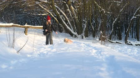Pretty girl in red hat walking with a dog in snow forest Stock mozgókép