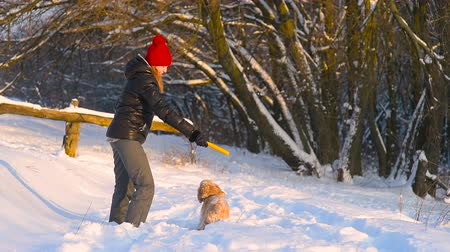 Woman train her dog with a yellow stick outdoors Stock mozgókép