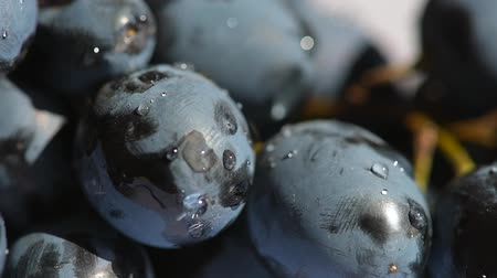 fructose : Shine and reflection water dropes on grape Stock Footage
