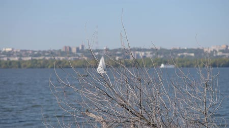 Dry tree branches and sailing boat move far
