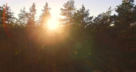 tre : Aerial view of sunlight over trees in a pine forest. 2 parts in 1 pack