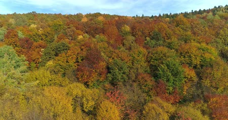 Aerial view beautiful of forest autumn day