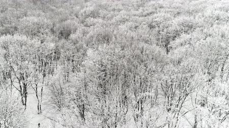 Aerial view of forest winter season.