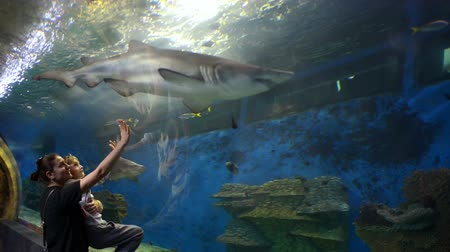 Mother and her little boy enjoying marine life at oceanarium, watching big white sharks