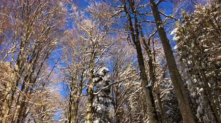 Sunny day and blue sky in a mountain forest on touristic trail, winter time