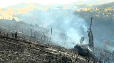 slash and burn : Mountain field cleared by fire started by northern Thai hill tribe farmers to clear land for planting crops. This technique is known as slash and burn agriculture Stock Footage