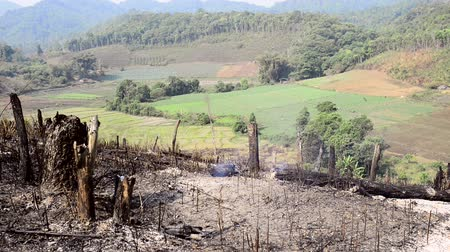 recentemente : A recently burnt hillside where hill tribe villagers are burning off forest to make way for new fields
