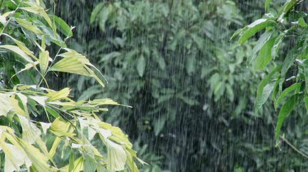 ulewa : Heavy monsoon rain falling in a garden