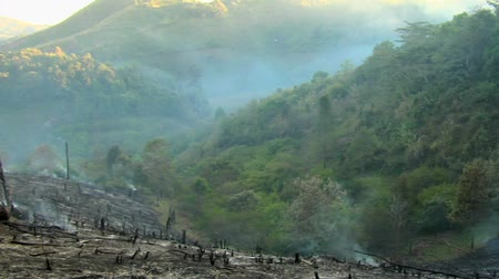 slash and burn : Pan across a recently burnt odd hillside where hill tribe villagers are burning off forest to make way for new fileds Stock Footage