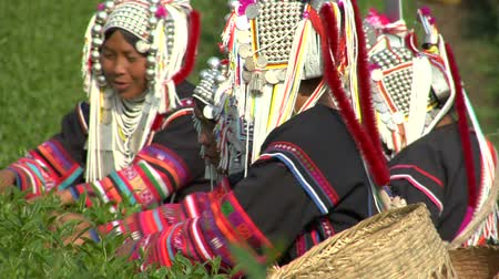 hill tribe : Akha woman making traditional roofing in a village in north Thailand Stock Footage