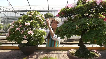 botanik : Woman working in a greenhouse Stok Video