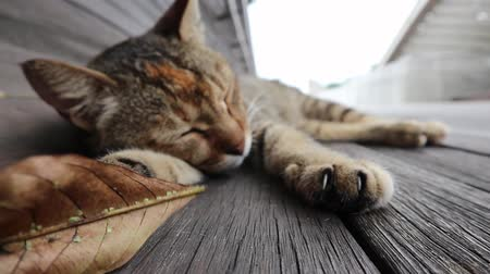 Sleepy Cat on the bridge