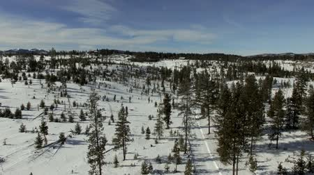Aerial flyover snowy winter forest in Colorado