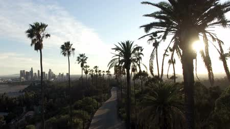 Drone view through tall palm trees to downtown Los Angeles Stock mozgókép