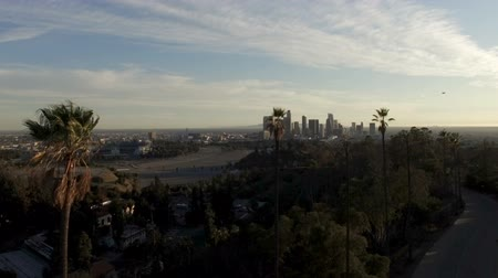 Aerial pan of downtown Los Angeles behind tall palm trees