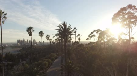 Amazing aerial drone clip of Los Angeles and sunlight behind park trees