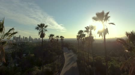 Aerial drone view above palm trees in sunlight over downtown LA Stock mozgókép
