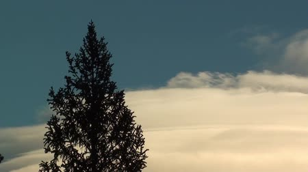 wspinaczka górska : Timelapse clip of evergreen tree and climbing clouds