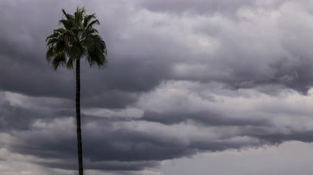 Time lapse of gray storm clouds and palm tree Stock Footage