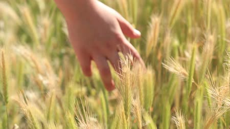 Child hand moving through field Stock Footage